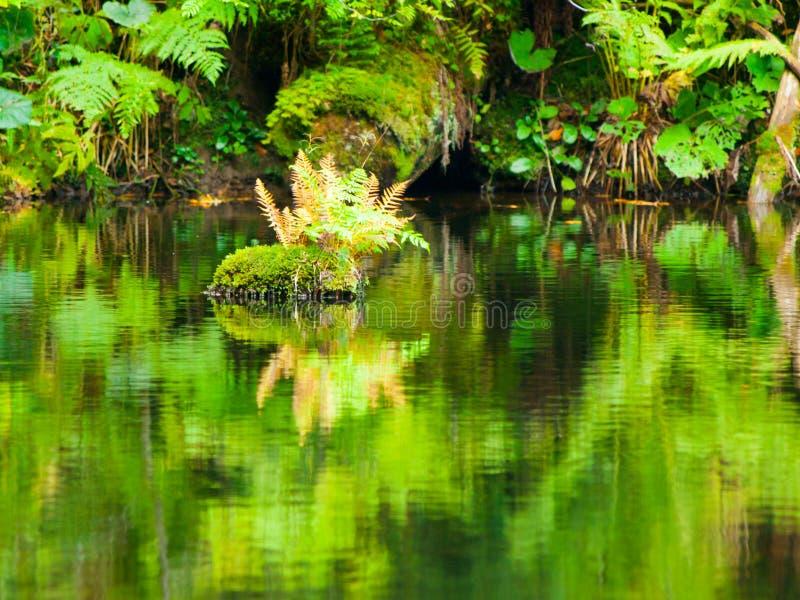 Üppige Grünreflexion in der Wasseroberfläche von premeval Waldsee, Boubin, Sumava-Berge, Tschechische Republik lizenzfreie stockbilder