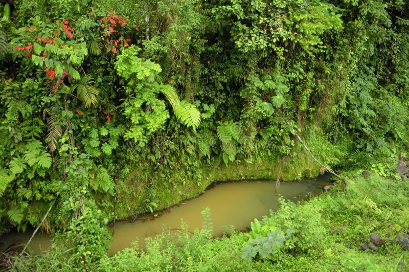 Üppige, tropische Anlagen umgeben einen kleinen Teich des gesammelten Regens in Costa Ricas biologischer Reserve Tirimbina stockbilder