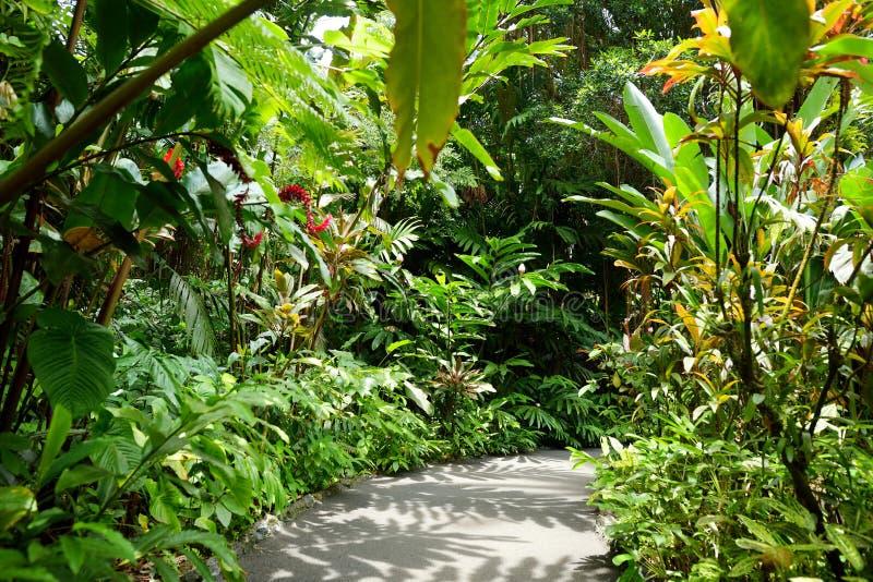 Üppige tropische Vegetation des tropischen botanischen Gartens Hawaiis von großer Insel von Hawaii lizenzfreie stockbilder