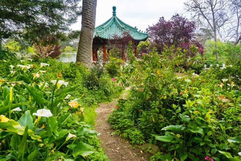 Üppige Vegetation in Golden Gate Park, San Francisco stockbild