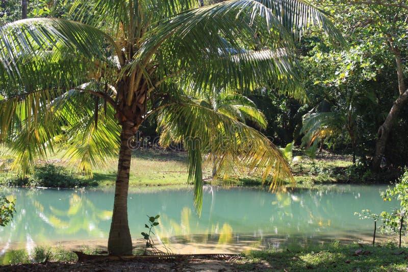 Üppiger Dschungel nahe der Bucht des Franzosen stockbilder
