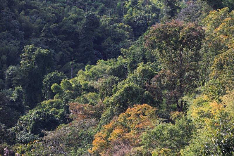 Üppiger grüner bunter Wald für Natur- und Umweltbewusstseinentwurfshintergrund mit Kopienraum lizenzfreies stockfoto