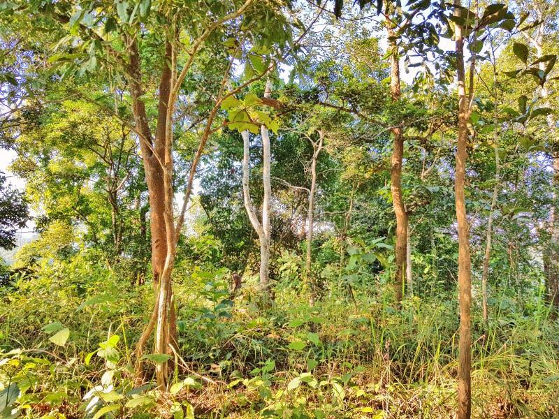 Üppiger grüner Wald, Anlagen und Vegetation stockbilder