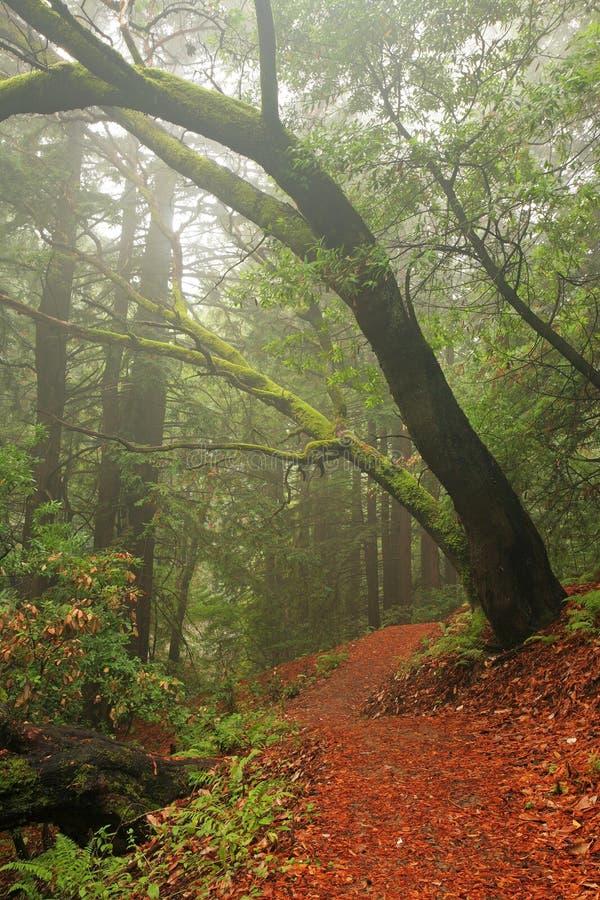 Üppiger mäßiger Regenwald stockbild