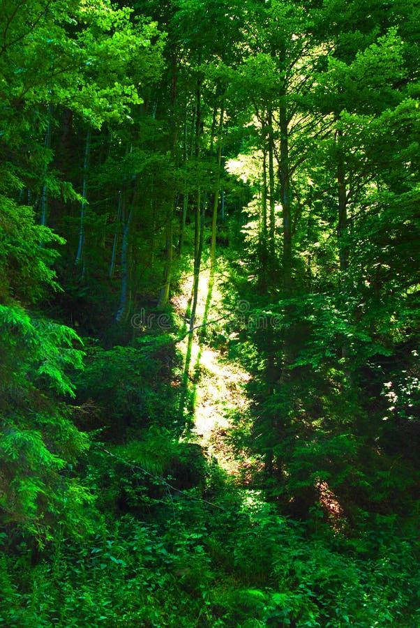 Üppiger Wald stockbilder
