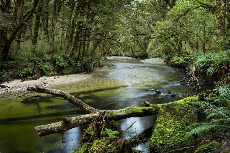 Üppiger Wald entlang der Kepler-Bahn stockbild