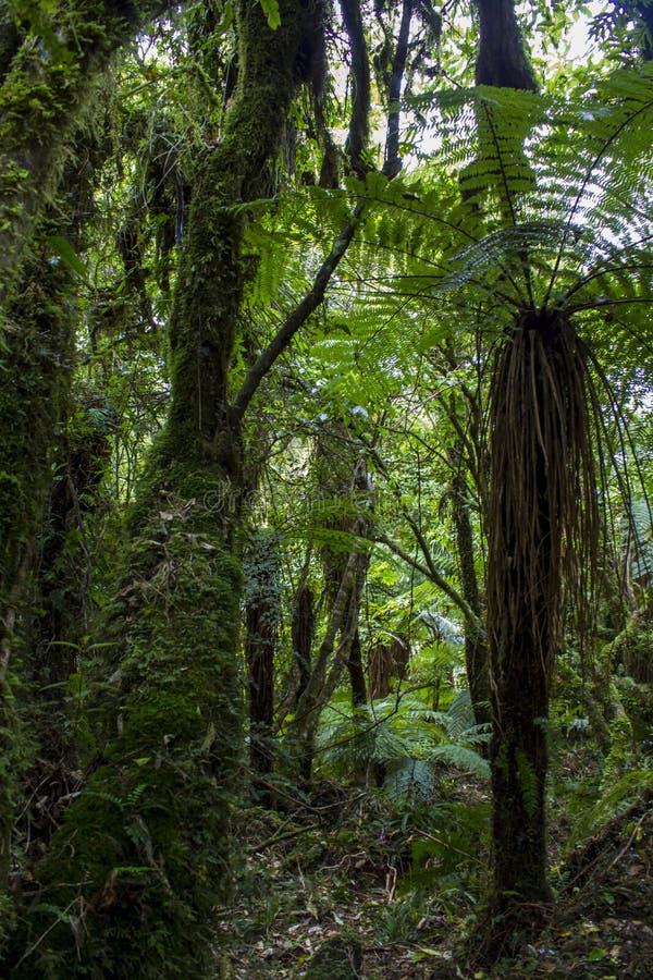 Üppiger Wald in Neuseeland stockfotos