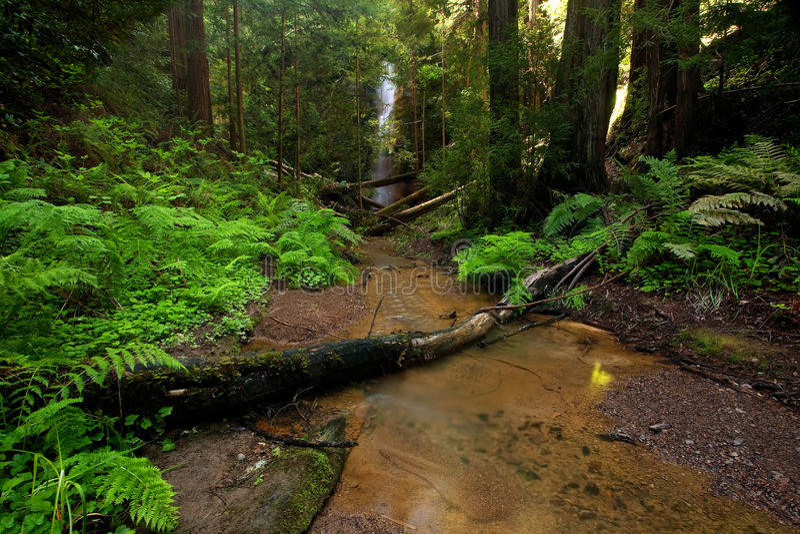 Üppiger Waldnebenfluß lizenzfreies stockfoto