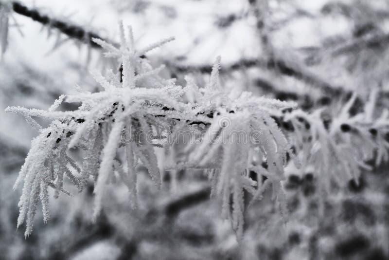 Üppiger Winterfrost auf der Niederlassung eines Baums stockfotografie