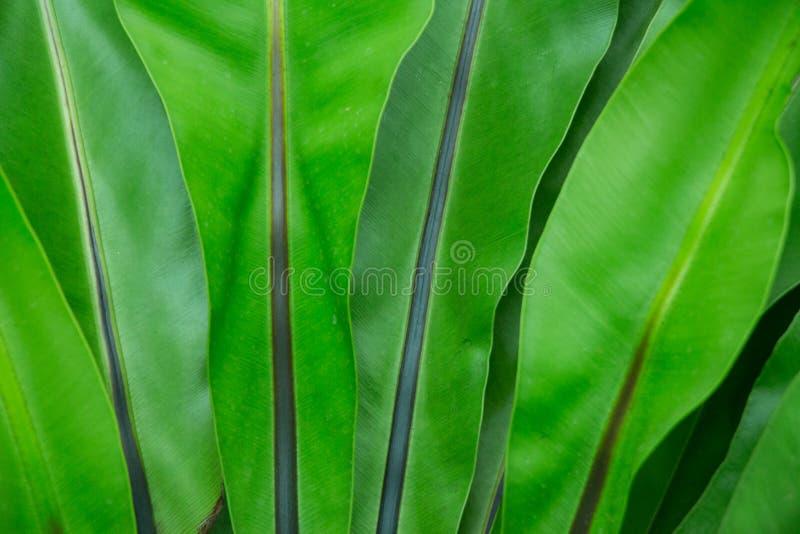 Üppiges Dschungelgrün mit abstrakten Bedeutungen des Friedens und des Anfanges, der Geburt und des Wachsens Diese Jungpflanze, ob stockfotografie