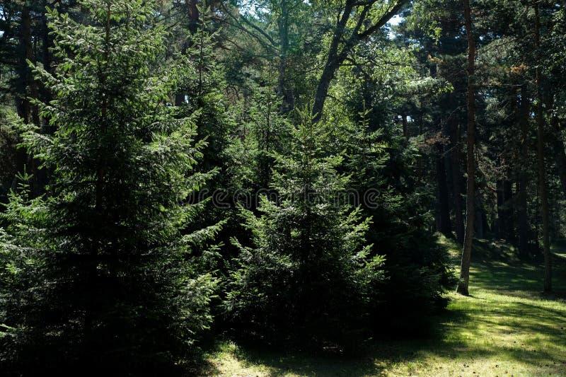 Üppiges Grün der Bäume im Sommer lizenzfreies stockbild