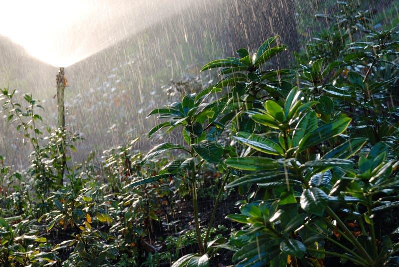 Üppiges grünes Laub im Regen des Sprengers lizenzfreies stockbild