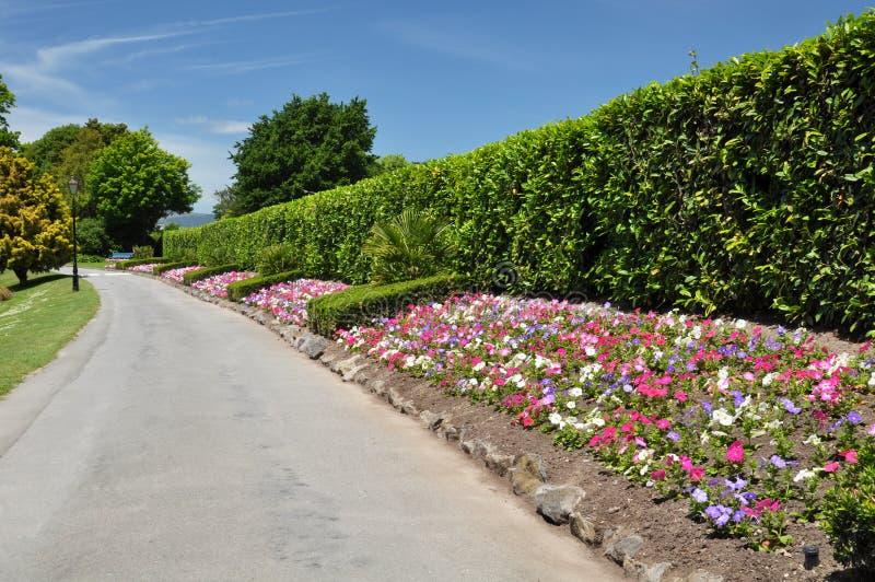 łóżek Christchurch kwiatu Mona nowa dolina Zealand zdjęcie stock