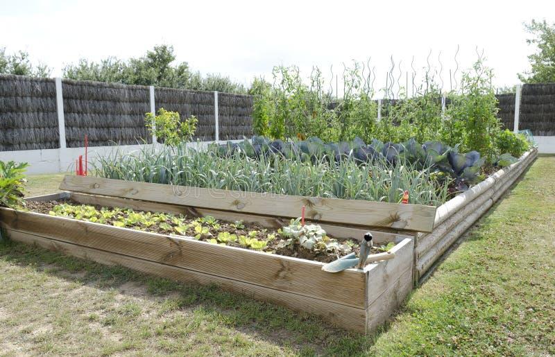łóżkowa koperu ogródu kuchnia fotografia royalty free