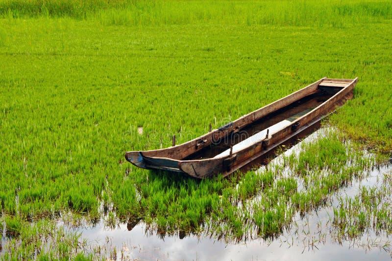 Łódź na łące z bogactwo wodą fotografia stock