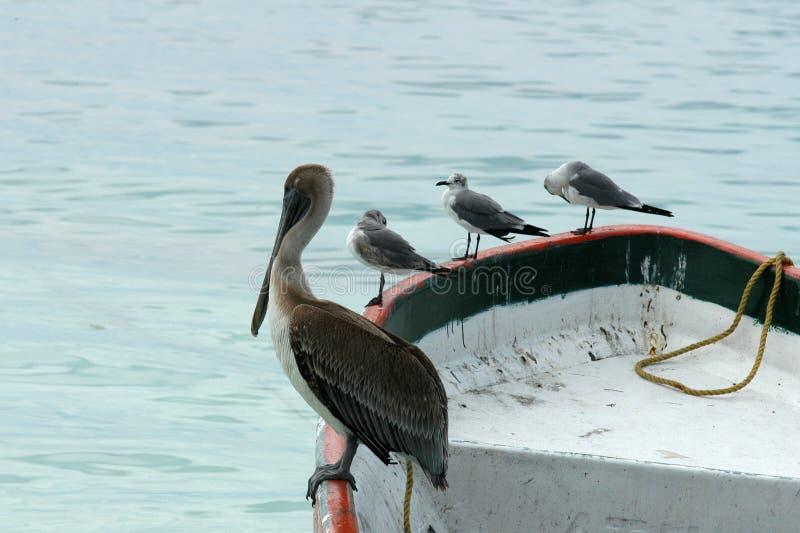 łódka meating Meksyku zdjęcie royalty free
