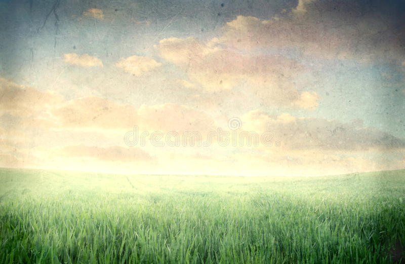 łąka zdjęcie stock