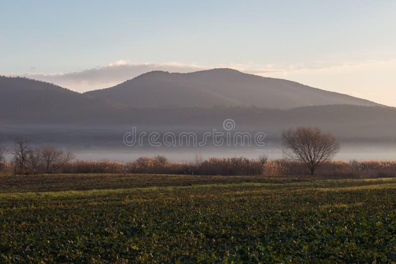 Łąka, drzewo i jezioro z mgłą, fotografia stock