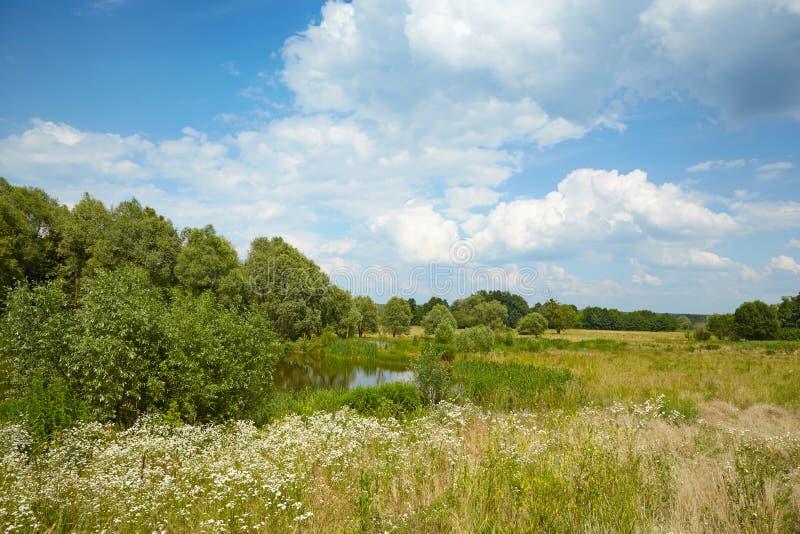 Łąka i jezioro w drewnach obrazy stock