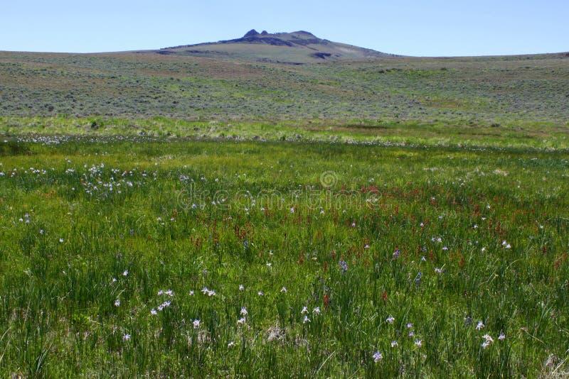 Łąka Kwitnie przy jeleń antylopy Halnym schronieniem obrazy stock