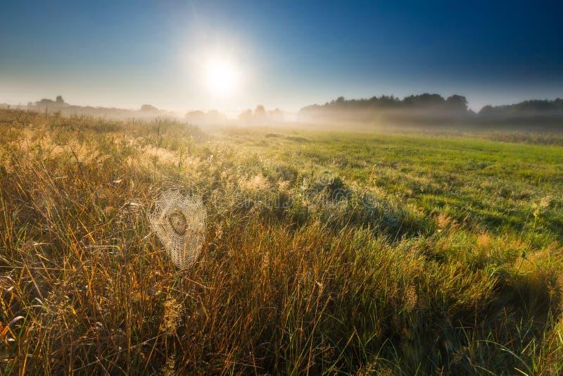 łąka przy rankiem obraz royalty free