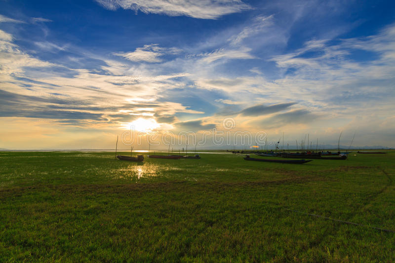 Łąka z światłem słonecznym zdjęcie royalty free