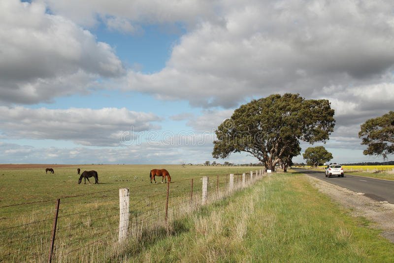 Łąka z koniami w Zachodnim Melbourne obrazy royalty free