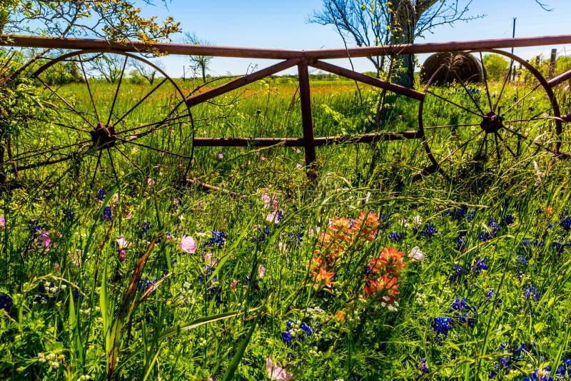 Łąka z Round siano belami i Świeżymi Teksas Wildflowers obraz stock