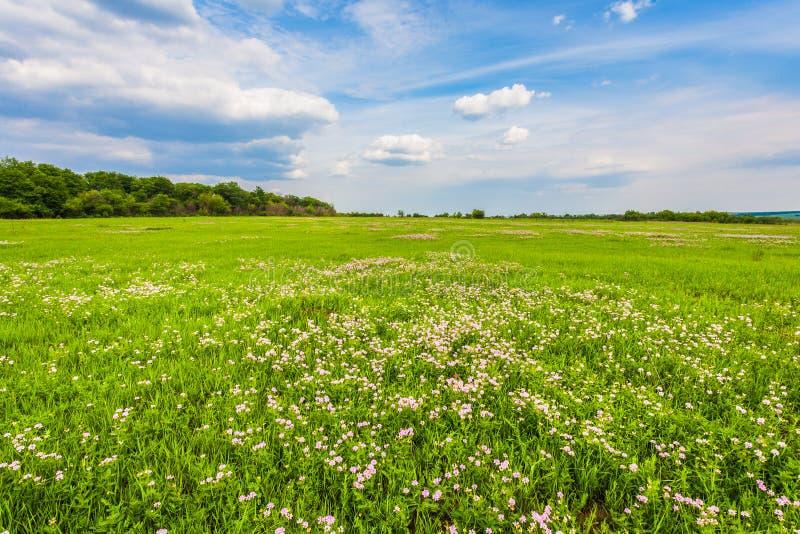 Łąka z zieloną trawą i niebieskim niebem obraz royalty free