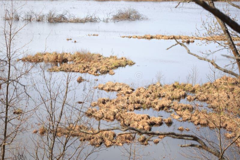 Łąka zalewał z wodą podczas wiosny powodzi obrazy stock