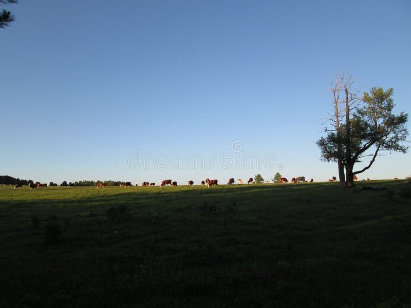Łąka & zmierzch obraz stock