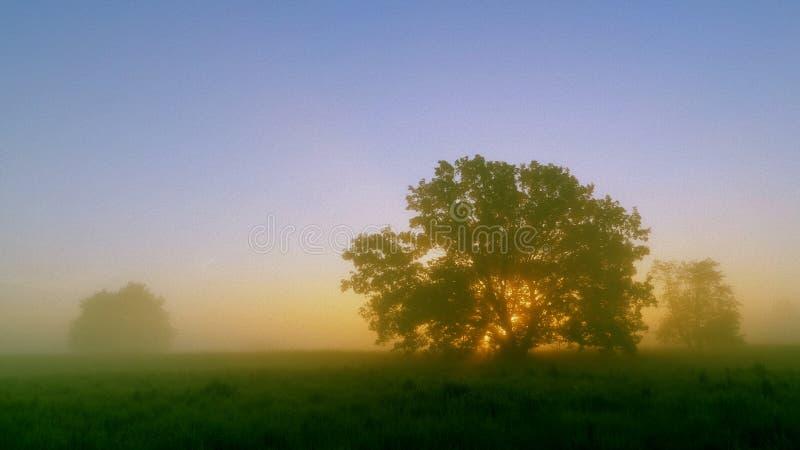 Łąki, drzewnego i powstającego słońce, obraz stock