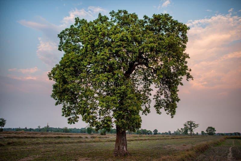 Łąki i niebieskie niebo atmosfera azjata pola I piękno fotografia royalty free