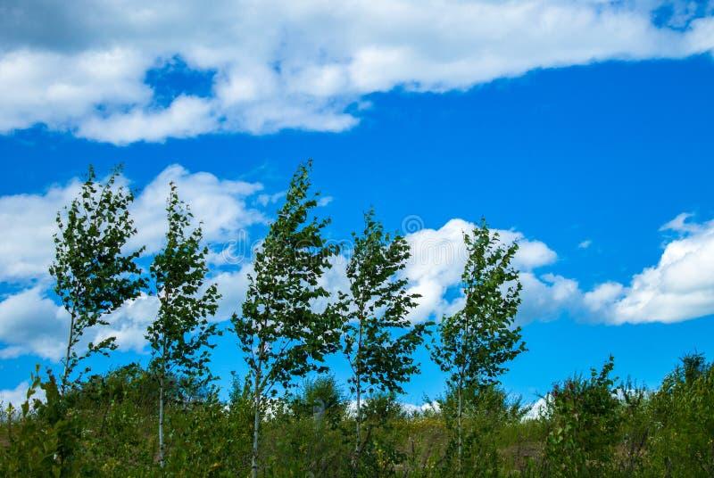 Łąki natury nieba słońca rośliny łąki chmury lasu świtu jeziorny dom zdjęcie royalty free