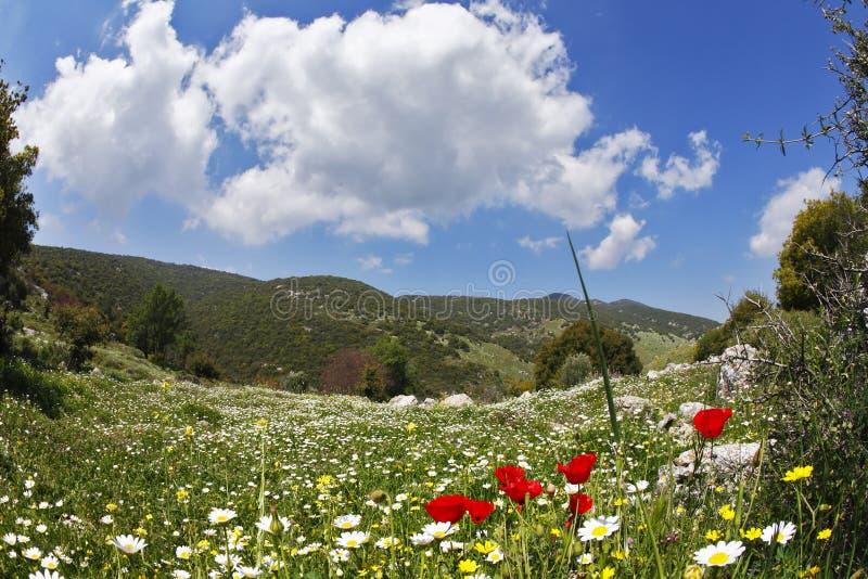 łąki wiosna zdjęcie royalty free
