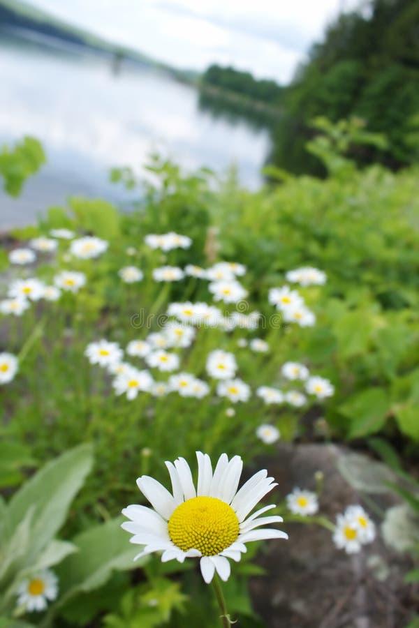 łąki wiosna obrazy royalty free