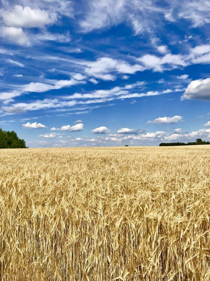 Łąkowa nieba drzewa adra chmurnieje błękitnego kolor żółtego obraz royalty free