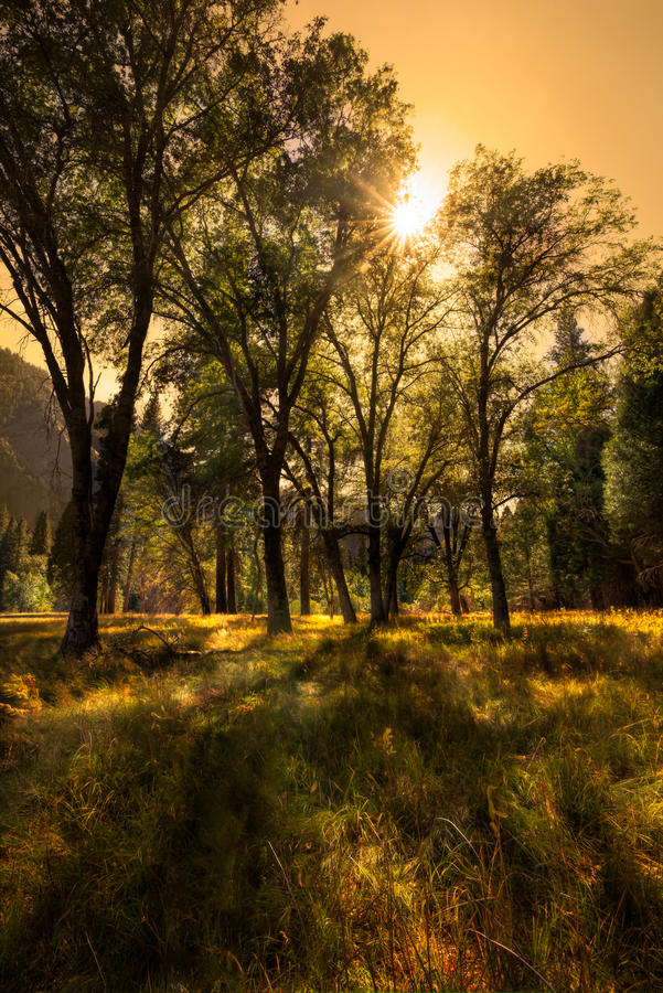 Łąkowa Yosemite dolina fotografia stock