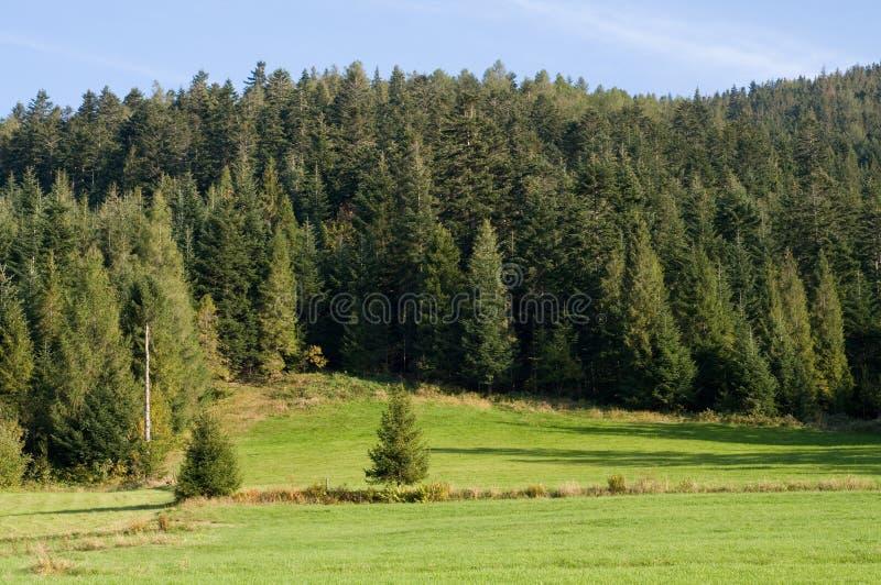 łąkowe góry zdjęcia stock
