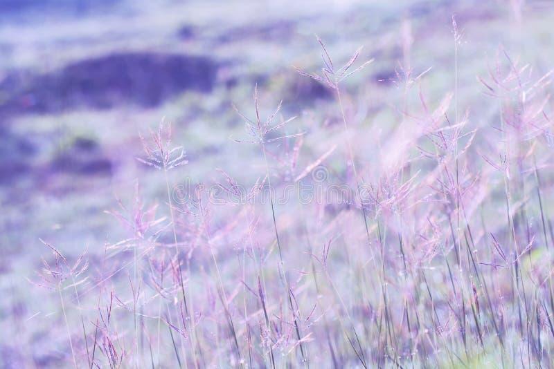 Łąkowe kwiat purpury barwią brzmienia piękny świeżego w miękkiej części ciepłym li zdjęcie stock