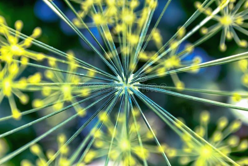 Łąkowi yelow kwiaty zamknięci w górę obrazy stock