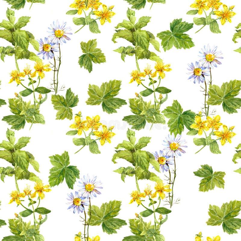 Łąkowi ziele, kwiaty, trawa bezszwowy wzoru akwarela zdjęcie royalty free