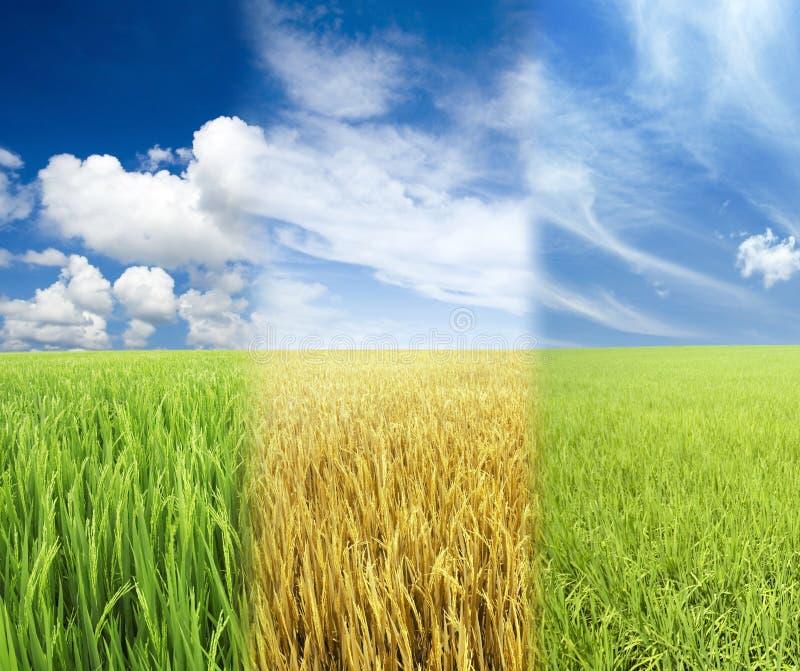 łąkowy niebo obraz royalty free