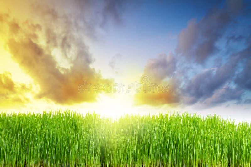łąkowy wschód słońca obraz royalty free