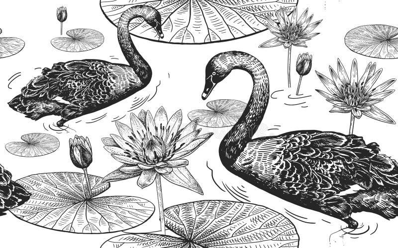 Łabędź i wodna leluja bezszwowy wzoru royalty ilustracja