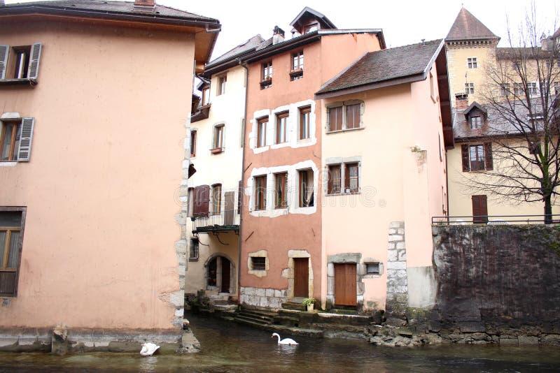 Łabędź pływa w Thiou rzece w Annecy, Francja ` s centrum miasta zdjęcia royalty free