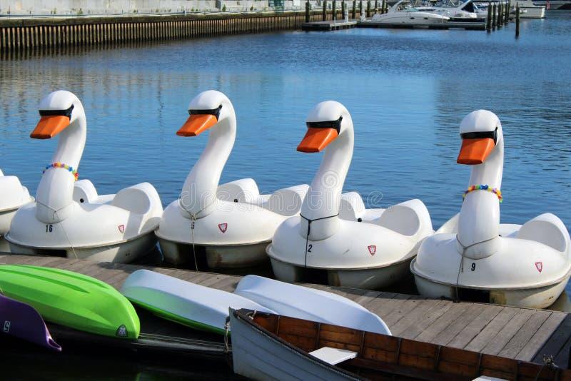 Łabędź pedałowe łodzie fotografia stock