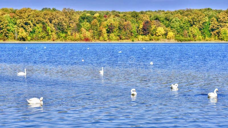 Łabędzi błękitny jezioro w jesieni zdjęcia stock