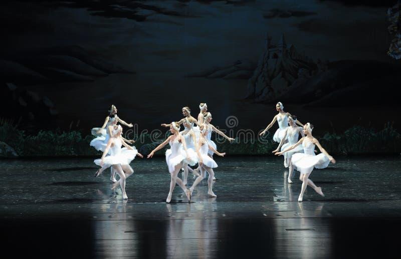 Łabędzi baleta Łabędź jezioro fotografia royalty free