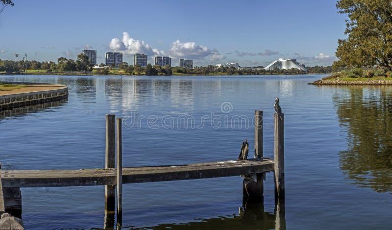 Łabędzia rzeka w Perth fotografia royalty free